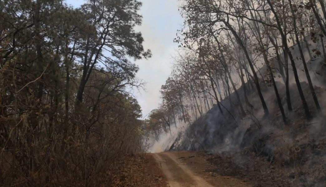 Incendio en el bosque La Primavera de Jalisco sigue sin denuncia