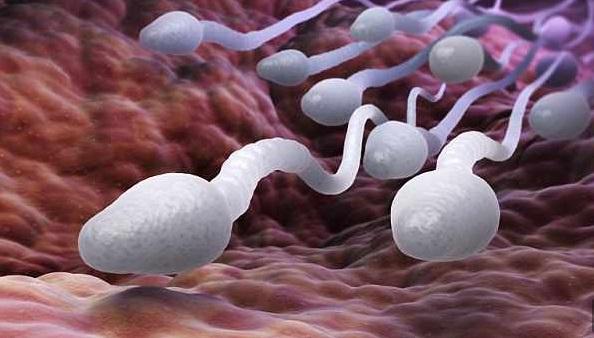 NASA envía esperma de humanos al espacio