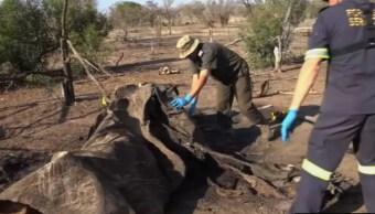 Todos los días 55 elefantes son asesinos por cazadores furtivos en el mundo