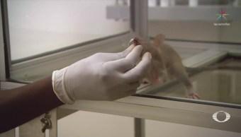 Científico Busca Detectar Tuberculosis En Niños Salud Avances Médicos