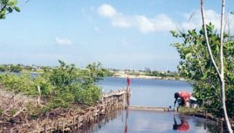 El Corchito reserva ecológica en Yucatán