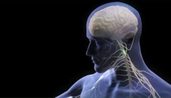 Cuide su salud en 1 minuto: Implante para la memoria- Lactobacilos