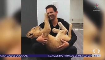 Empresario mexicano rescata a un jaguar negro y crea santuario para felinos