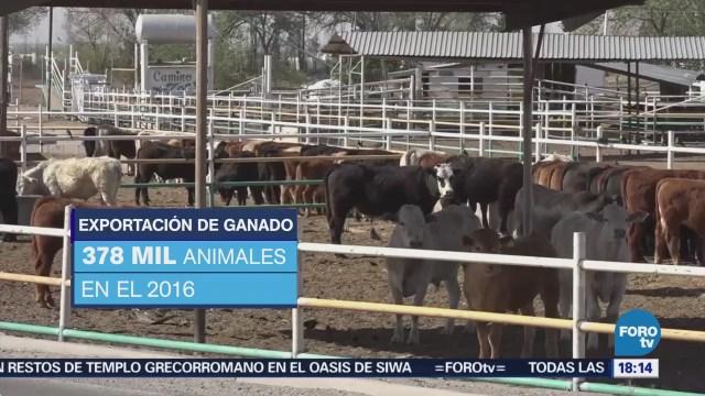 Exportación de ganado de México a Estados Unidos aumenta 50%