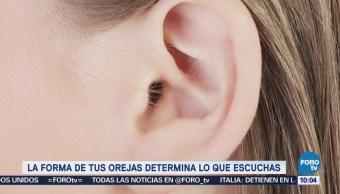Extra Extra: La forma de tus orejas determina lo que escuchas