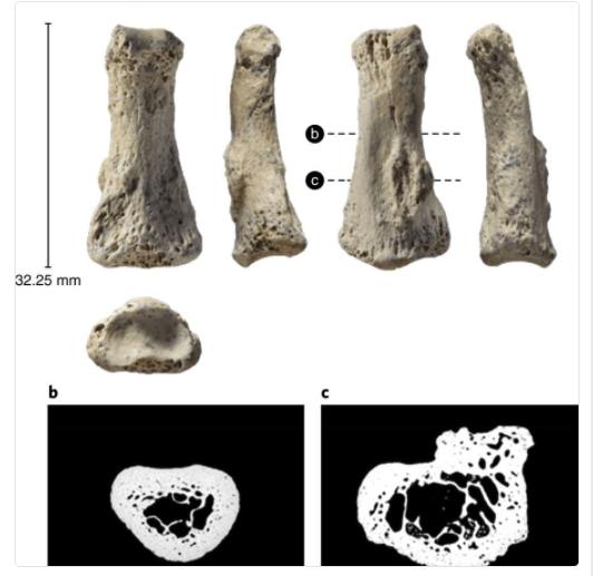 homo sapiens salió de África antes de lo que se creía