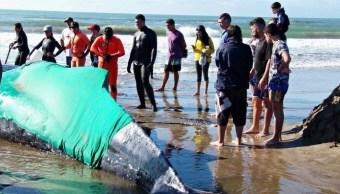 argentina intenta rescatar a una ballena varada en mar de plata