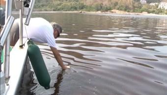 Emiten alerta preventiva por marea roja tóxica en Manzanillo, Colima
