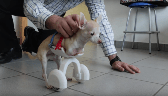 mexicanos-desarrollan-protesis-canina-impresa-3d