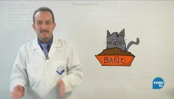 Mitos Realidades Enfermedades Transmitidas Gatos Infecciones