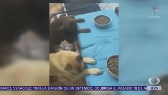 Perros rezan antes de comer sus croquetas
