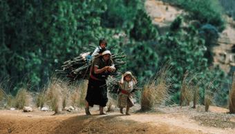 Cerca de 2,5 millones de niños trabajan en México