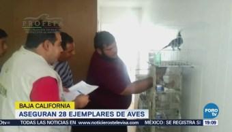 Profepa Asegura 28 Aves Baja California