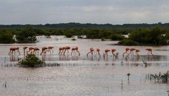 Campeche, entidad con mayor superficie terrestre bajo protección legal