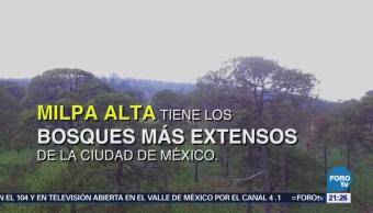 Tala Clandestina Pérdida Hectáreas Milpa Alta