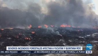 Severos Incendios Forestales Afectan Yucatán Q. Roo