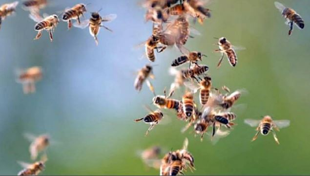 ue valida limitar uso insecticidas proteger abejas