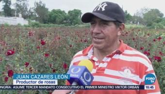 Atlixco comercializará 35 mil toneladas de rosas por Día de la Madre