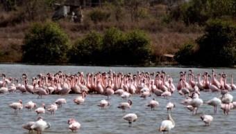 Península de Yucatán santuario de aves migratorias