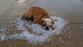 Onda de calor en México provocará temperaturas de hasta 50 grados: SMN
