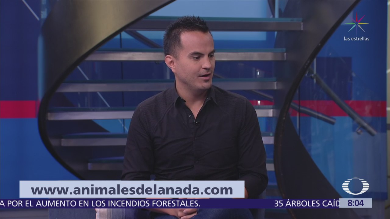 Campaña social busca concientizar la adopción de animales callejeros en México