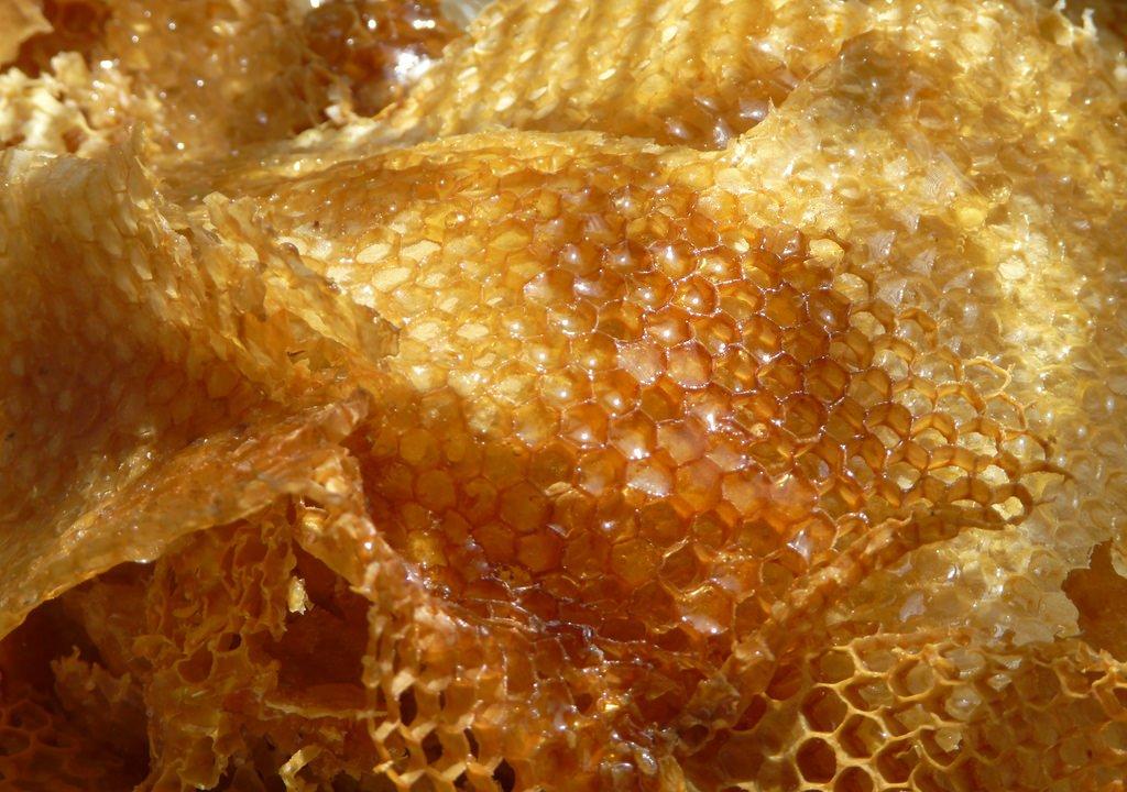 miel-producida-yucatan-producto-consumido-reconocido-nivel-mundial