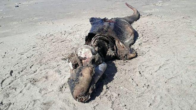 criatura-playa-gales-reino-unido-extraña