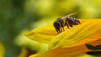 abeja-polinizando-una-flor-en-uno-de-sus-habitats-naturales