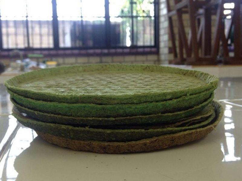 Crean platos de nopal desechables