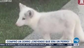 Extra Extra: Compra un zorro, creyendo que era un perro