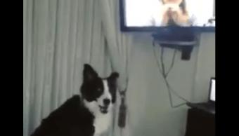 Una perrita reacciona de forma emotiva después de 9 meses sin ver a su dueña