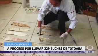 Vinculan a proceso a traficante de buche de totoaba en Baja California
