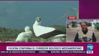 Yucatán Conforma Corredor Bilógico Mesoamericano
