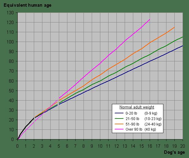 Edad de los perros vs edad humanos