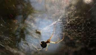 Sonora alerta por insectos venenosos en época de calor