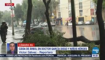 Cae árbol sobre vehículo en la colonia Doctores, CDMX