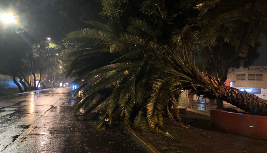 Lluvia en la CDMX provoca caída de árboles y accidentes vehiculares