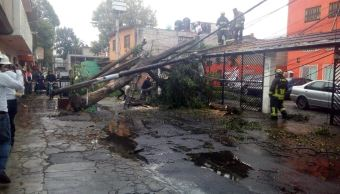 lluvia arboles ciudad méxico proteccion civil