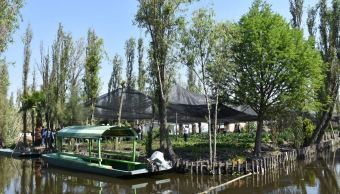 Invertirán 6.8 mdp para conservar chinampas como patrimonio