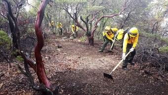 Suman al menos 800 incendios forestales en Campeche
