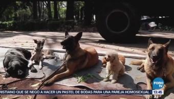 Cómo Cuidar Perros Calor