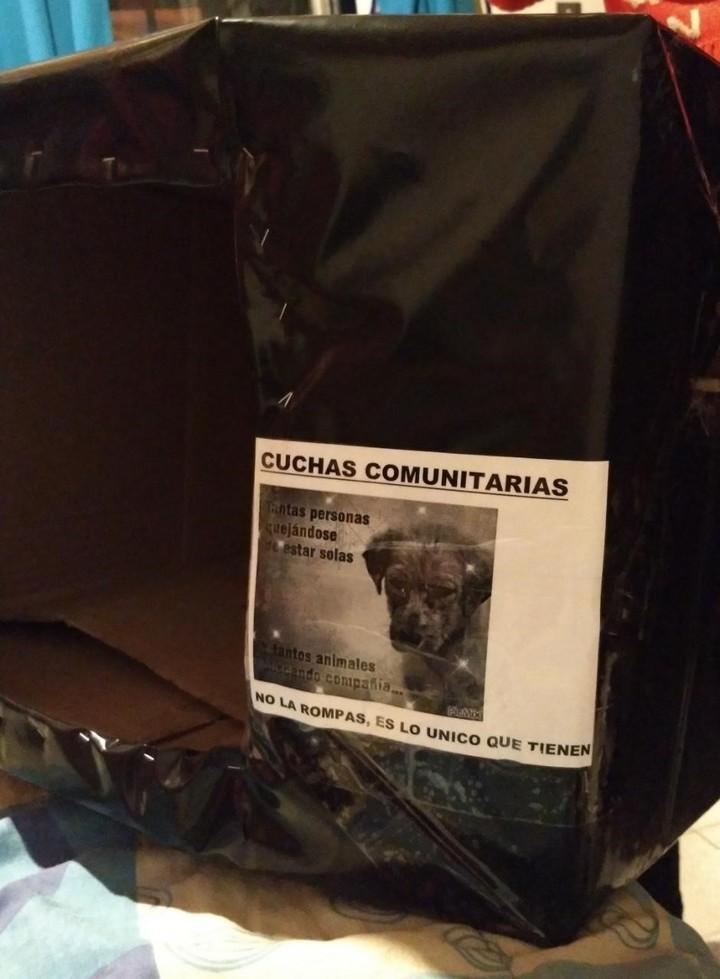 argentino-joven-crea-casas-perros-callejeros-que-pasan-frio