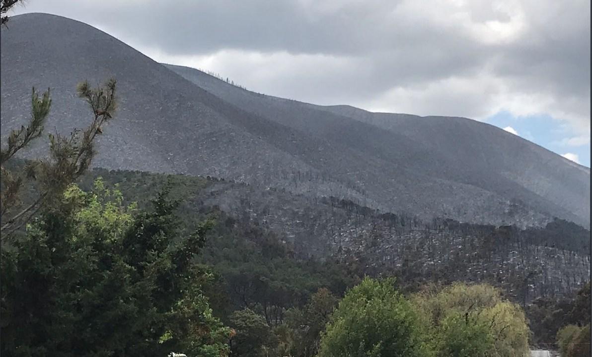 Liquidan incendio forestal en predio 'Las Copetonas' en Arte