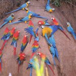 Tambopata, santuario de Perú con mayor biodiversidad del planeta