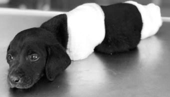 Perro-Desmembrado-Mutilado-Abandonado-Turquia-Controversia-Redes-Sociales-3