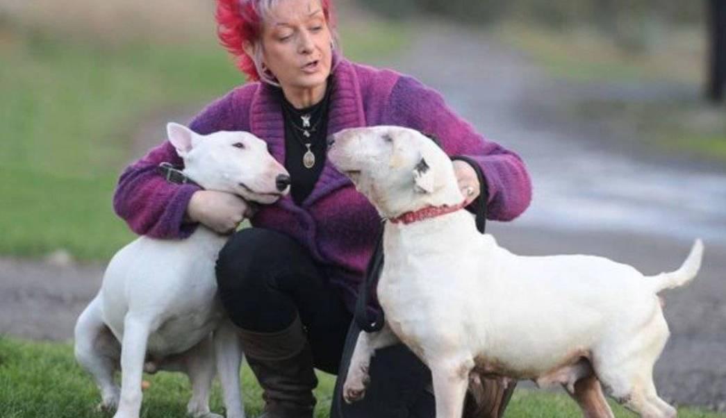 Perros-Bull-terrier-Esposo-Mujer-Ultimatum- Abandona-Matrimonio