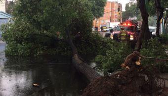 Caen varios árboles por la lluvia CDMX