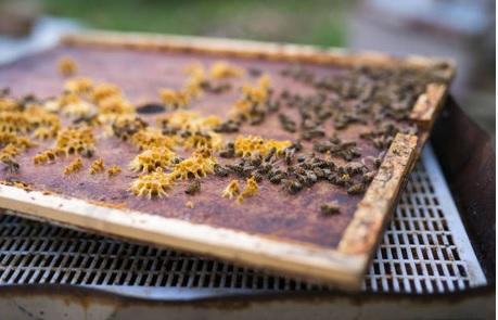En riego, exportación de miel yucateca a Europa