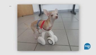 Prótesis Patas Para Mascotas UVM 3D