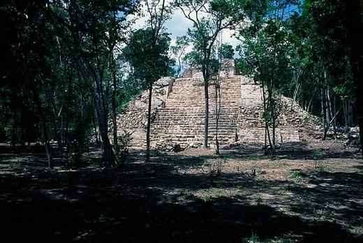 Deforestación pone en riesgo selvas y bosques de Campeche